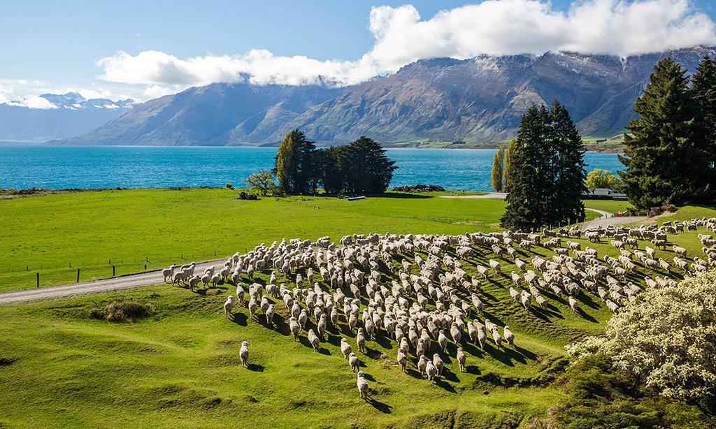 HỌC NGÀNH NÀO ĐỂ DỄ DÀNG ĐỊNH CƯ NEW ZEALAND VÀ ĐƯỢC NHIỀU ƯU ĐÃI?